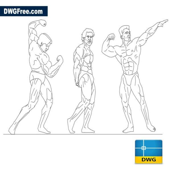 Bodybuilder dwg